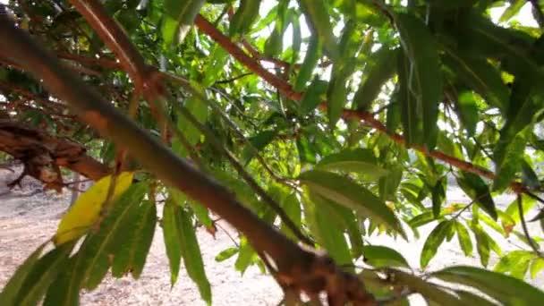 Baum laub