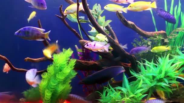 színes korall halacskák