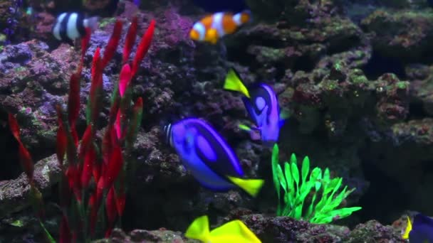 Colorful Coral fishes
