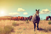 Group of horses grazing in the field