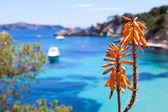 Photo Tropical Orange Flower