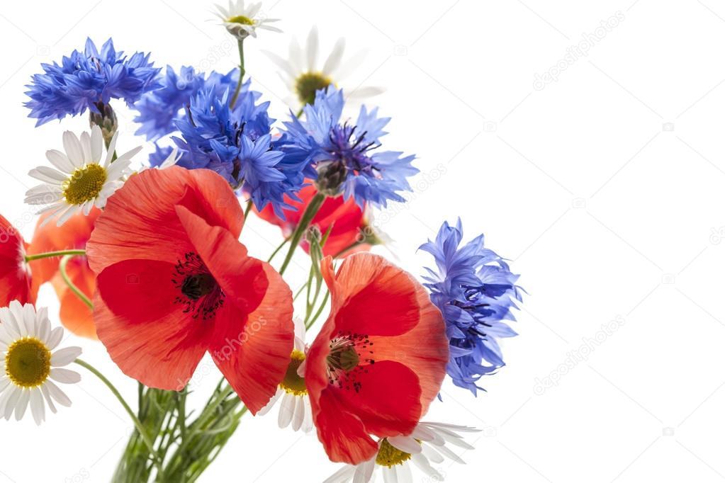 Bouquet de fleurs sauvages — Photographie elenathewise © #43171509