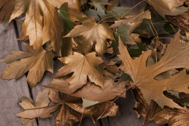 Background with autumn gold leaves and piece of bark