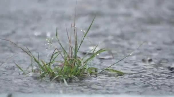 goccia dacqua durante la pioggia