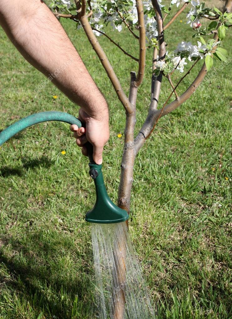 Watering Tree