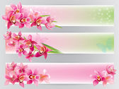 Fotografie Horizontal banners with orchids