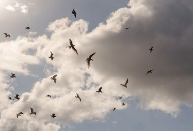 Clouds seagulls