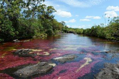 Canio Cristales mountain river. Colombia