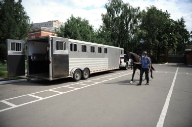 Carriage horse in the trailer