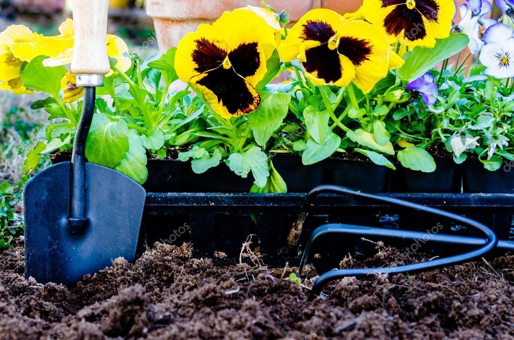 Planting Flowers Closeup