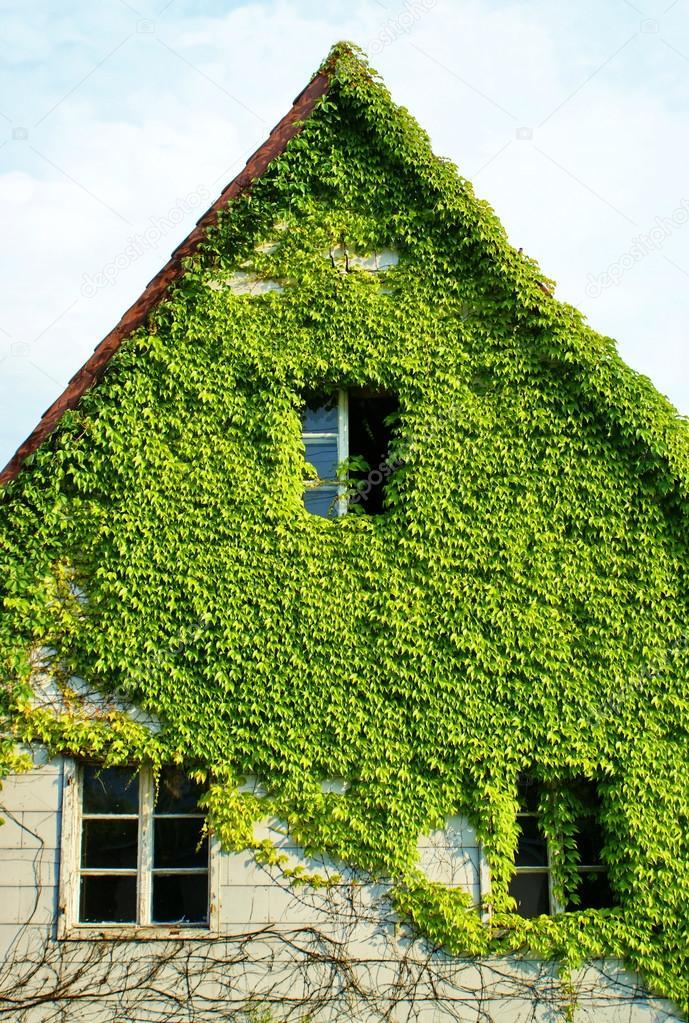 Vieille maison cachée de lierre vert image de deepgreen
