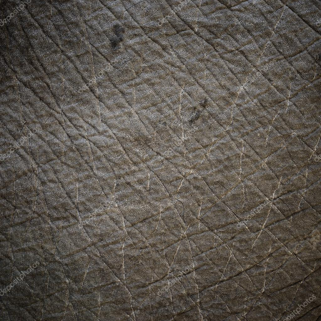 depositphotos 39453341 stock photo elephant skin texture - Tapete Elefantenhaut