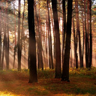 The sun's rays breaking through the trees in the forest in autum