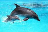 A baba a vízben úszó-delfin