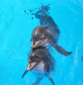 Photo Glad beautiful dolphin smiling in a blue swimming pool water on