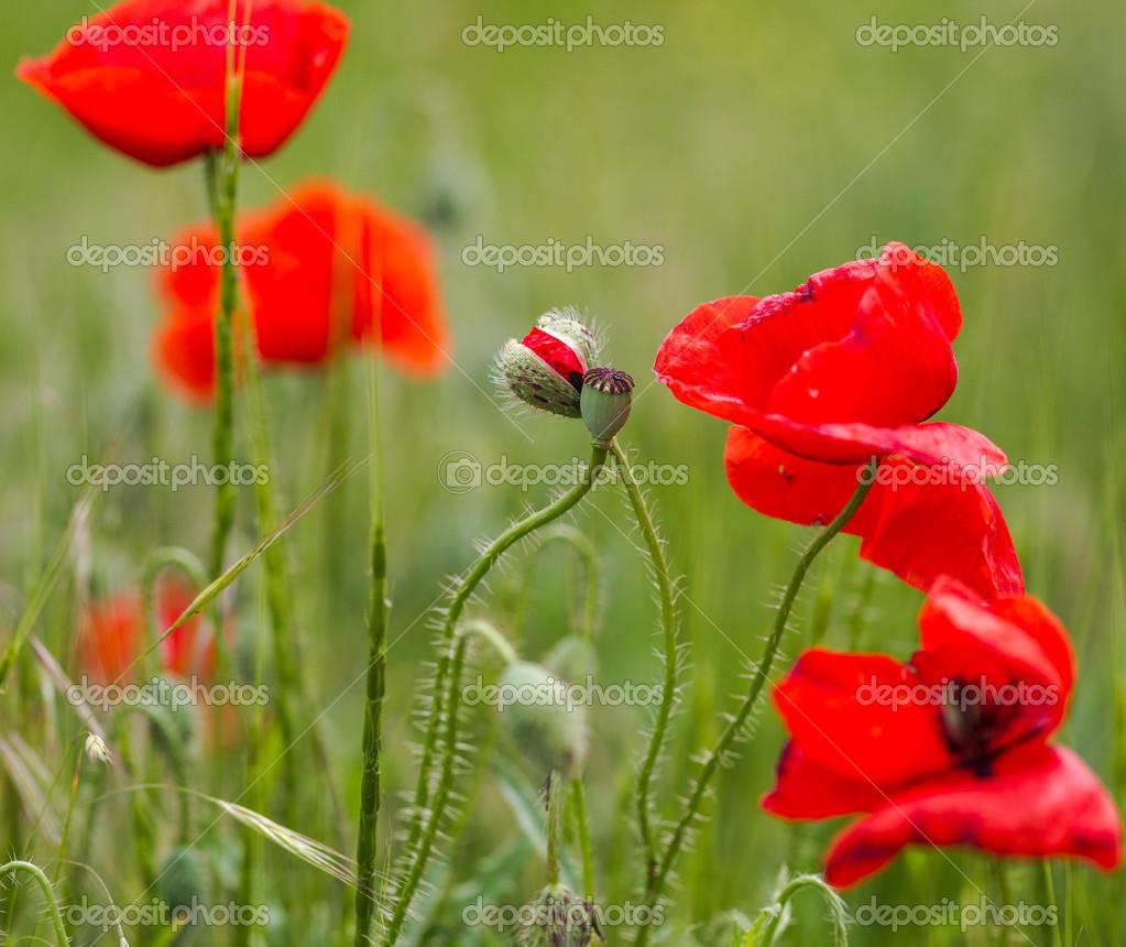 çiçek Açan çiçekler Ve çiçek Tomurcukları Mead Arka Plan üzerinde