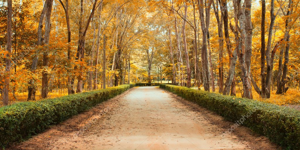 Pathway in autumn Landscape