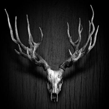 Deer Antler hang on Wood Panel