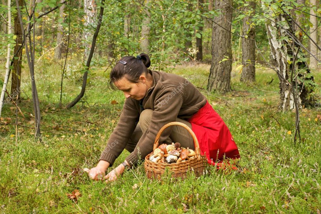 Картинки грибник в лесу