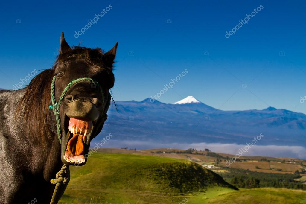 Funny horse with a silly expression on it's face