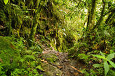 Tropical rainforest in the National Park, Ecuador