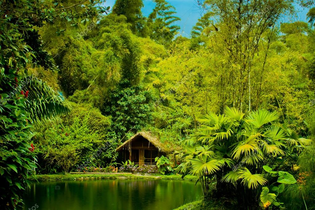 Cabin in the jungle