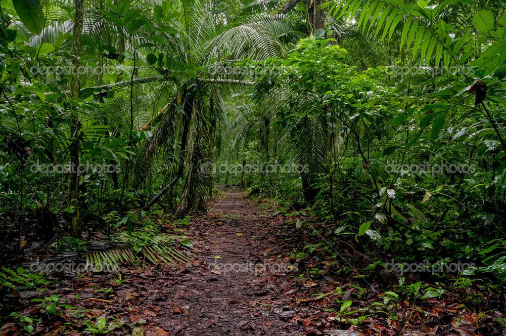 sonidos de la selva tropical descargar google