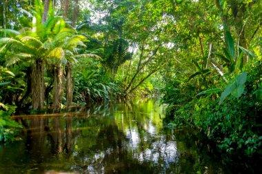 Amazon Jungle stock vector