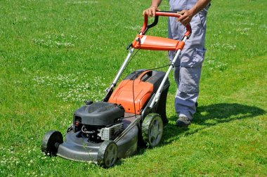 Worker moving lawn on the meadow