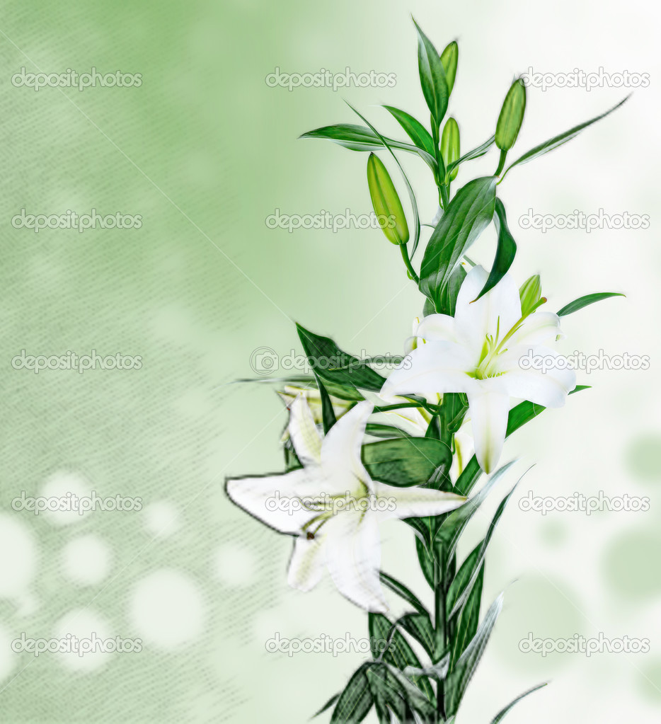 Beautiful white lily flowers stock photo lebval 22697137 beautiful white lily flowers stock photo izmirmasajfo Gallery