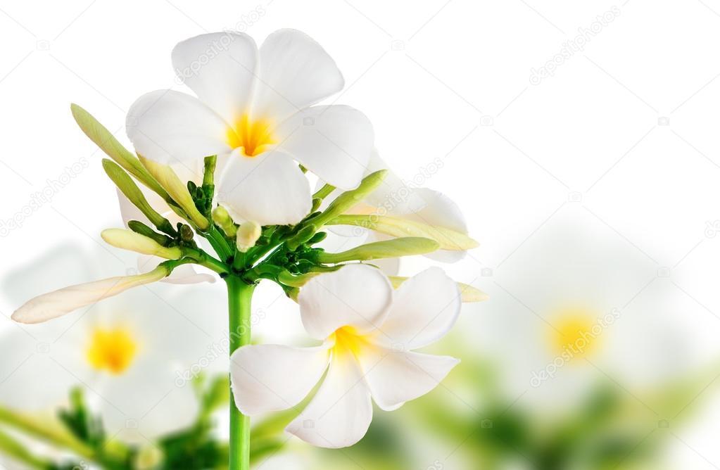 flor hermosa foto de stock lebval 48733101