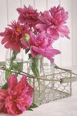 closeup Pivoňka květy v lahvích