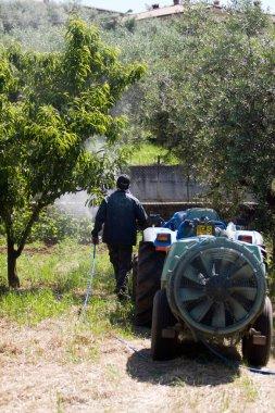 Farmer working in garden