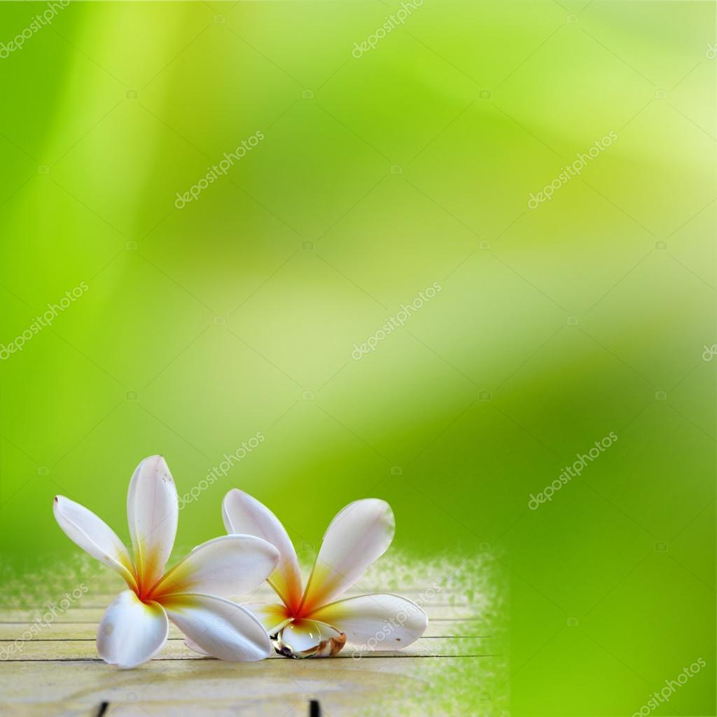 Frangipani on light green backgroun