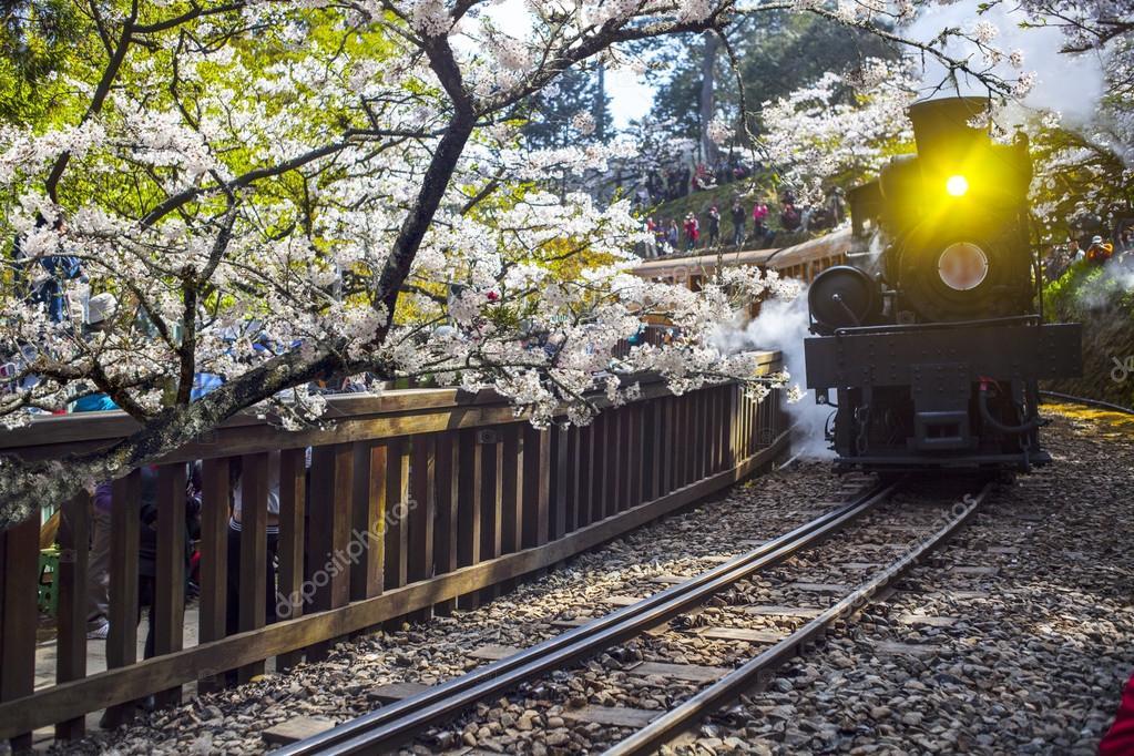 Alishan Forest train