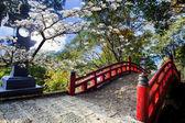 krásné sakura v chrámu