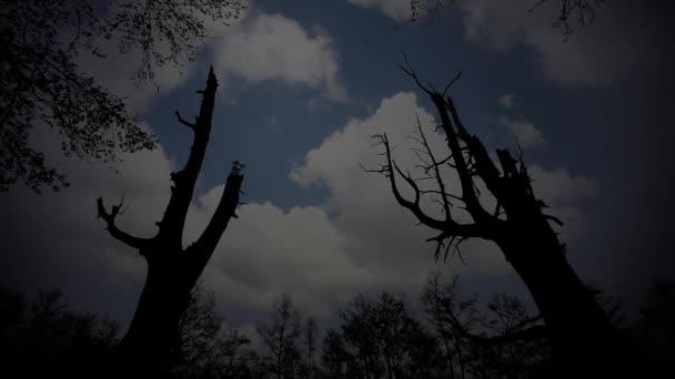 dva stromy v slavnou horu
