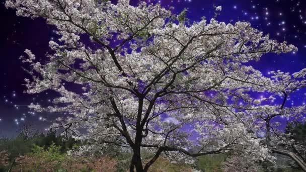 pěkný sakura noční scéna