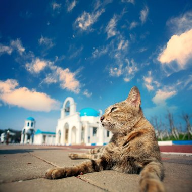 Blue and White Church bell with cat