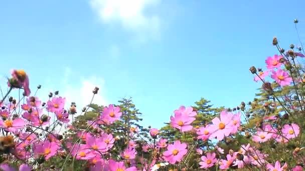 Daisy a modrá obloha