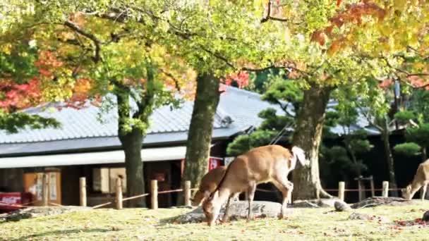 jelen s pěkným pozadím