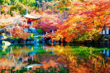 Autumn Japanese garden with maple in Kyoto,Japan