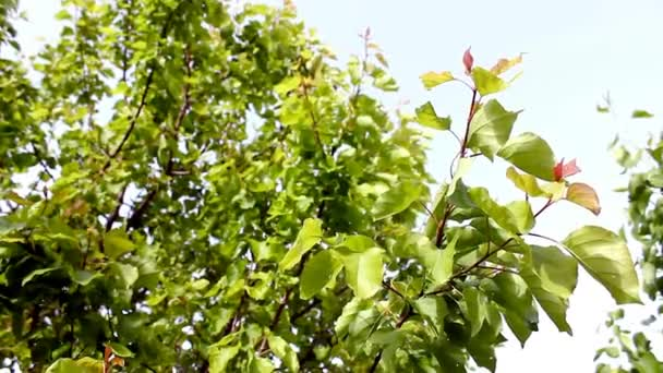 Pěkný strom  listy