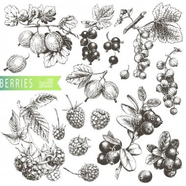 Great hand drawn illustrations of berries isolated on white background. stock vector