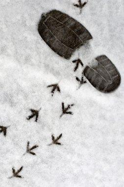 Footprints in a snow