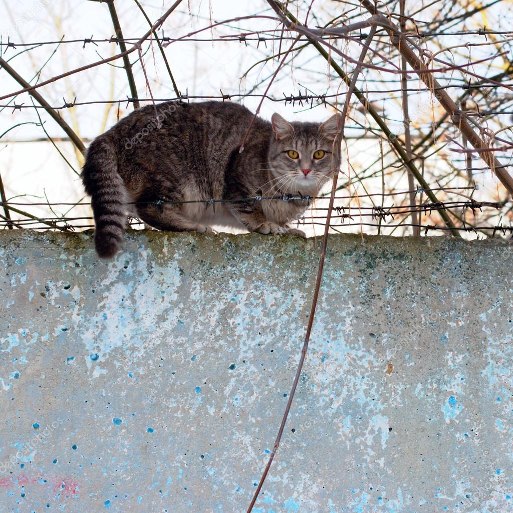 Cat sitting on a concrete fence — Stock Photo © ultrapro #21861179