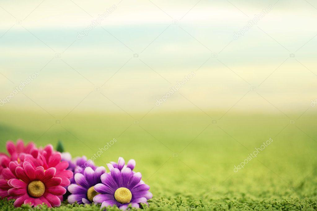 Cute flowers on lawn