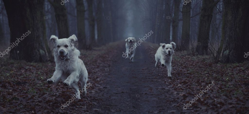 Fantastic picture of running dog