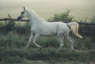 Picture of white steed with rular landscape in background