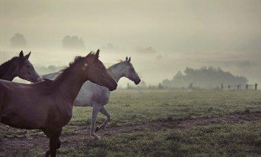 Great scene of running horses